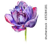 Wildflower Tulip Flower In A...