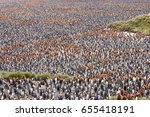 king penguin chicks  brown  and ... | Shutterstock . vector #655418191