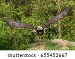 American Eagle Taking Off