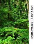 Jungle With Tree Ferns Near...