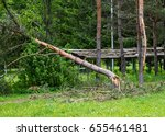 the fallen pine and the... | Shutterstock . vector #655461481