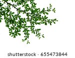leaf of top on tree on the... | Shutterstock . vector #655473844