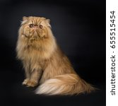 Sitting Red Persian Cat With...