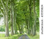 alley  county fermanagh ... | Shutterstock . vector #65555824