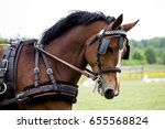 portrait of horse pulling... | Shutterstock . vector #655568824