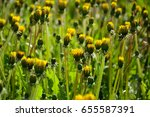 background with dandelions... | Shutterstock . vector #655587391