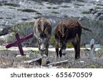 Donkeys At Animal Cemetery In...