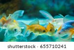 Goldfishes In Tropical Aquariu...