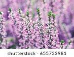 violet heather flowers field... | Shutterstock . vector #655723981