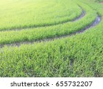 green rice field with morning... | Shutterstock . vector #655732207