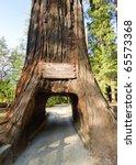 chandelier tree | Shutterstock . vector #65573368