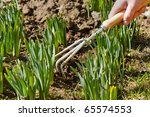 Woman\'s Hand Working The Soil...