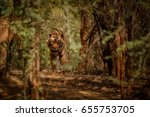 tiger in the nature habitat.... | Shutterstock . vector #655753705