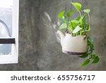 Plant In Ceramic Pots Hang On...
