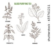 best herbs for blood purifying...   Shutterstock .eps vector #655761211