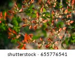 macro view of colorful... | Shutterstock . vector #655776541