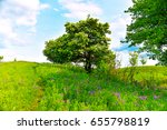 beautiful unusual spring... | Shutterstock . vector #655798819