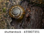 macro image of a brown snail | Shutterstock . vector #655807351