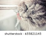 Cat Drinks Water From The Tap