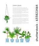 set of various vector indoor... | Shutterstock .eps vector #655823464