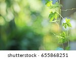 nature green abstract bokeh... | Shutterstock . vector #655868251