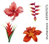 tropical red flowers on white... | Shutterstock . vector #655907071
