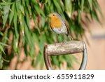 european robin  erithacus... | Shutterstock . vector #655911829