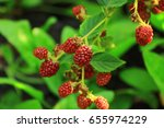 Small photo of blackberries are very similar to raspberries, begin to keep up and will be ready when acquire black color