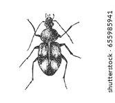 beetle isolated on white ... | Shutterstock .eps vector #655985941