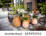 Potted Herbs In Patio Garden. ...