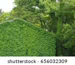ivy covered housing | Shutterstock . vector #656032309