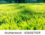 spring and summer sunlights... | Shutterstock . vector #656067439