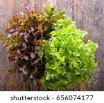 Green Oak Lettuce On Wooden...