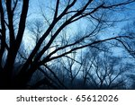 Bare Trees Of A Forest In...
