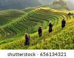 rice fields on terraces in the... | Shutterstock . vector #656134321
