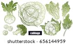 various cabbage set. white... | Shutterstock . vector #656144959