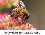 Macro Shot From Garden Of Bee...
