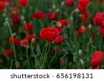 flowers red poppies blossom on... | Shutterstock . vector #656198131
