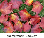 autumn leaves | Shutterstock . vector #656259
