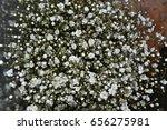 beautiful little white flowers... | Shutterstock . vector #656275981