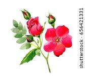 wildflower rose flower in a... | Shutterstock . vector #656421331