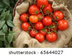 Organic Tomatoes On A Natural...