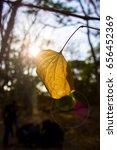 yellow leaf | Shutterstock . vector #656452369