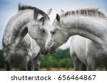 two beautiful white horses | Shutterstock . vector #656464867