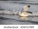 seagull landing in the water... | Shutterstock . vector #656511985