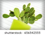 cactus in pot on white... | Shutterstock . vector #656542555