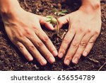 hands of farmer growing and... | Shutterstock . vector #656554789