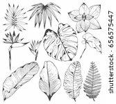 tropical plants. set of vector...   Shutterstock .eps vector #656575447