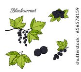 berries  branches and leaf of... | Shutterstock .eps vector #656578159