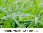 rain drops on grass. | Shutterstock . vector #656585317
